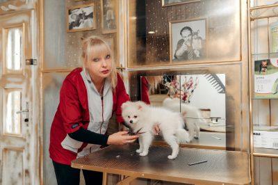 Stříhání psů v salonu pro zvířata PGC